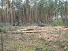 ОАО Сосновский лес