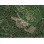 космоснимок лесосеки