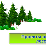 forest-1024x427